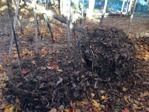 Compost bin 1